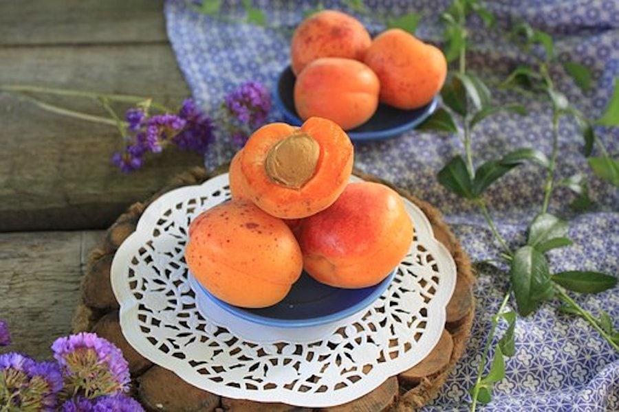 Aprikosensoße mit Griesspudding aus Omas Rezeptekiste
