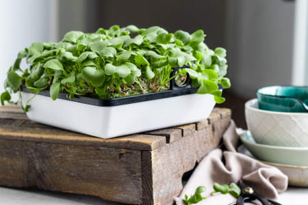 agrilution Plantcube Saatmatte